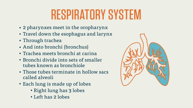 Quick Review Of The Respiratory System Pinoy Logic